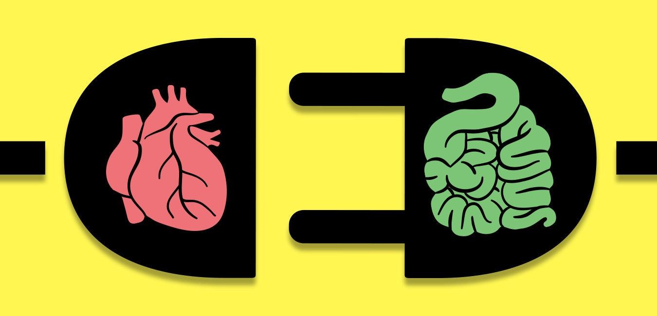 Una nueva clase de medicamentos cardiovasculares actúa en la vía microbiana intestinal que produce TMAO